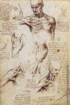 Леонардо да Винчи - родоначальник анатомии
