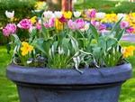 Как украсить свой сад весной