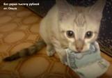 Кот украл 1000 рублей