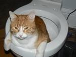 Если очень хочется зайти в туалет